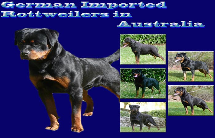 Main picture of German imported dogs